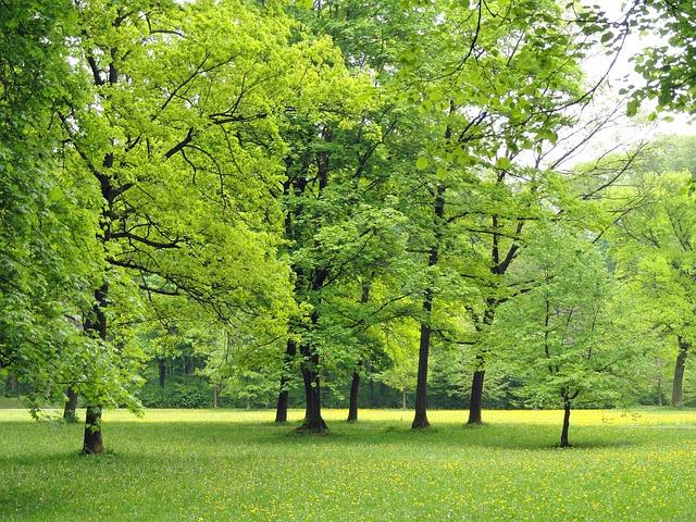 バーベキューを東京で!おすすめ公園の厳選10ヶ所!
