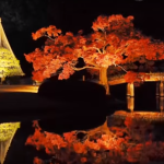 六義園の紅葉はライトアップが凄い!簡単アクセスもご案内!
