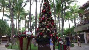 ハワイでのクリスマスの過ごし方その3: ハワイ風クリスマスツリーを満喫♪